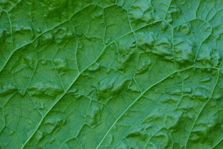 green natural texture from a large leaf of a plant Imagens - 124984955