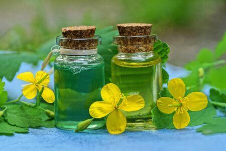 green celandine plant