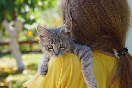 little gray kitten lies on the girl Banco de Imagens