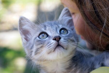 kitten sits and looks on the girls shoulder Banco de Imagens