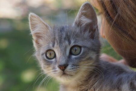little gray kitten sits and looks on the girls shoulder Banco de Imagens