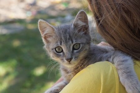 gray kitten lies on the shoulder of a girl in yellow clothes