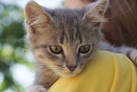kitten lies on the shoulder of a girl in yellow clothes Stockfoto