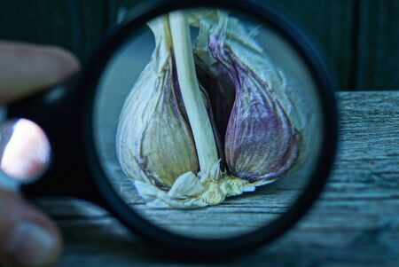 black magnifier increases garlic on a gray table