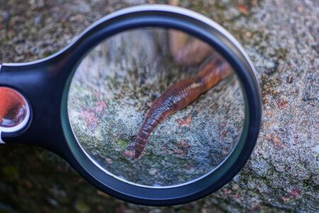 black magnifier magnifies long red worm on gray stone