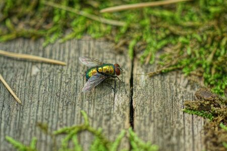 fly sits on a gray wooden board with green moss