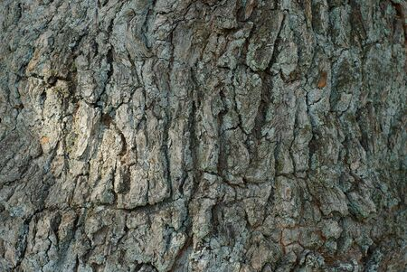 natural vegetative background from a gray bark on a tree
