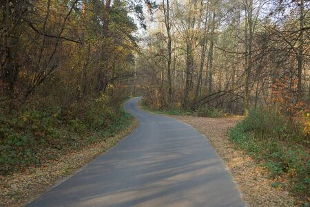 gray asphalt road among autumn colored forest 스톡 콘텐츠