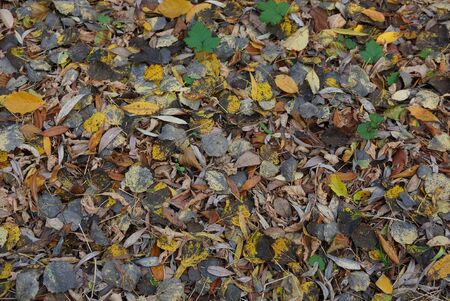 natural plant texture of dry colored fallen leaves on the ground