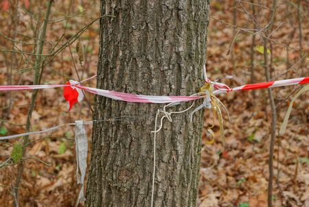 gray tree trunk with spotty plastic tape barrier in nature