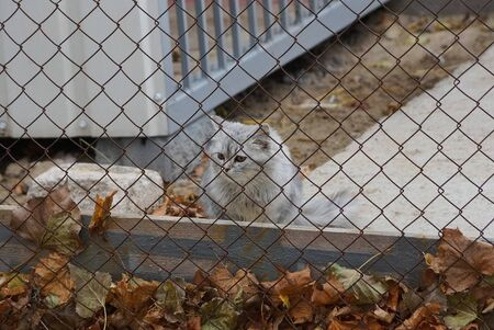 little gray kitten sits behind a metal mesh fence with dry leaves on the street
