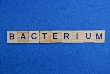 word bacterium made from wooden gray letters lies on a blue background 스톡 콘텐츠
