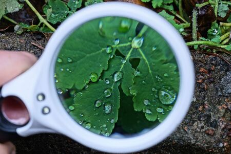 one large round magnifier magnifies the green leaves of plants with drops of water in nature