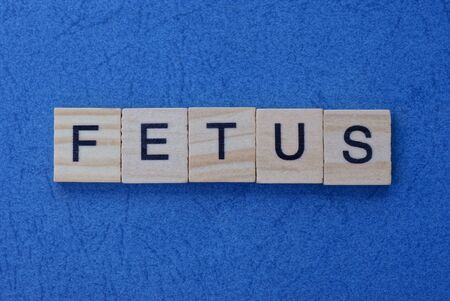 short word fetus in small square wooden letters with black font on a blue background