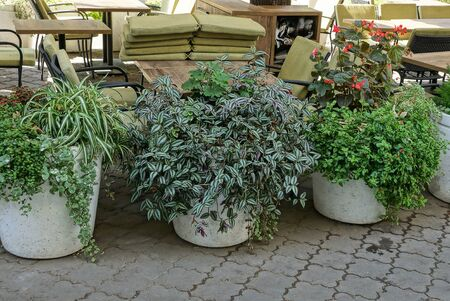 a row of three white flowerpots with green plants and flowers stands on a gray sidewalk on the street