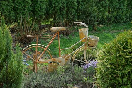 the decor of an old brown metal bike stands in the green grass and coniferous bushes on the nature in the garden
