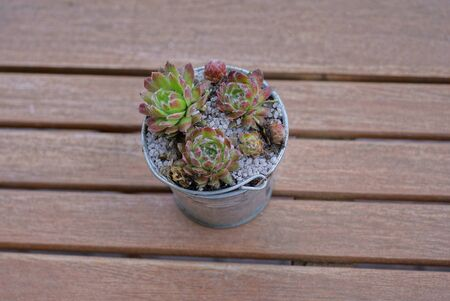 one small metal bucket with colored ornamental plants stands on brown wooden table boards