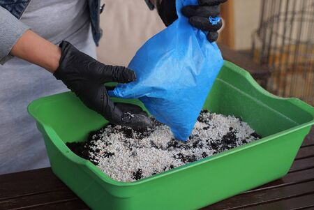 hands of a gardener in black gloves pour white fertilizer from a blue cellophane bag onto black ground in a green plastic box on the table