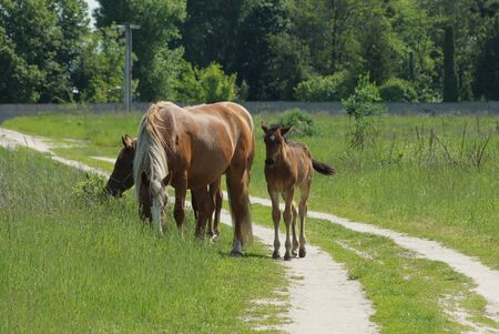 brown horses on a country road near green grass on the field