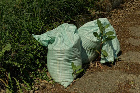 two large gray garbage bags stand on the pavement of a road near green grass and vegetation