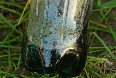 part of a plastic bottle with a black drink lies on the green grass in nature