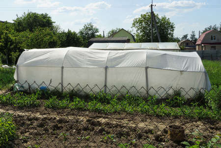 white big cellophane greenhouse stands in green vegetation in the garden on a sunny day