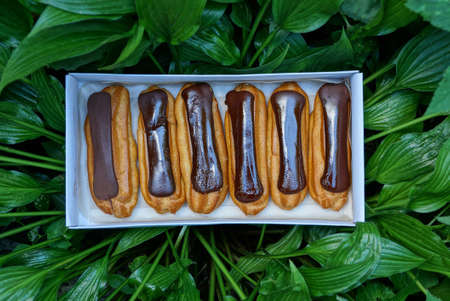 a row of brown chocolate brownies in a white paper box on green leaves of plants on nature
