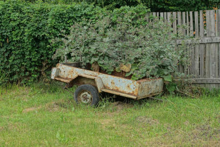 an old gray metal trailer stands on green grass overgrown with burdocks near a wooden fence on the street Stockfoto