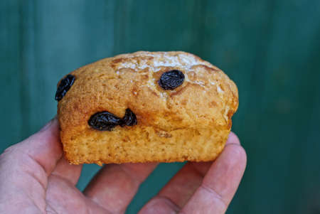 food from one brown muffin with raisins holding fingers on hand on green background