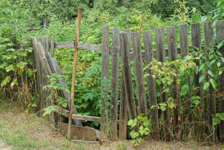 part of an old gray wooden fence with broken boards overgrown with green vegetation on a rural street Banco de Imagens