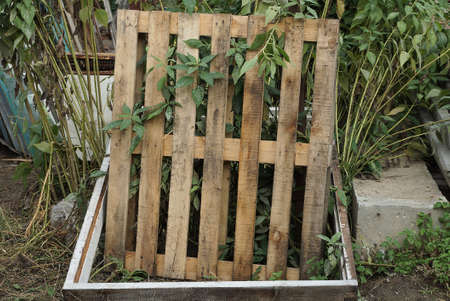 one brown square pallet made of wooden boards stands outside in the green grass
