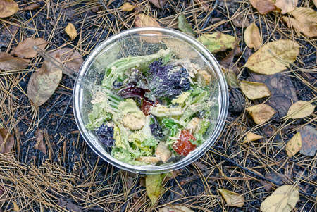 fresh green salad and red tomatoes in a white plastic plate stands on brown dry pine needles cones and fallen leaves in the autumn forest