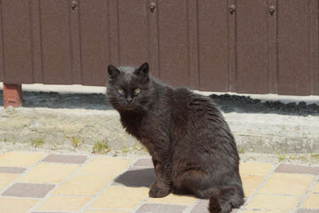 one big black cat sits on the sidewalk on the street against a brown fence wall