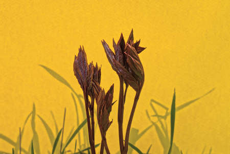 red sprouts of small plants in green grass on a yellow background Standard-Bild