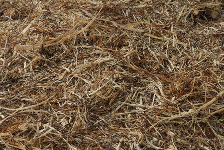 natural plant texture from dry gray brown grass in a field Standard-Bild