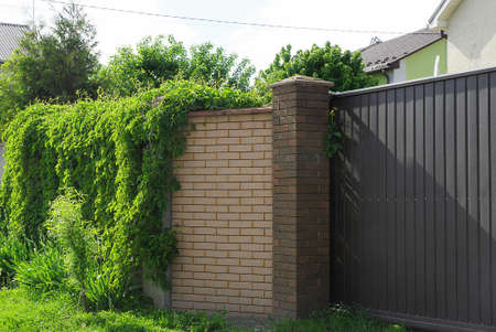 brown brick wall of the fence overgrown with green vegetation and part of the metal gate on the street Stockfoto