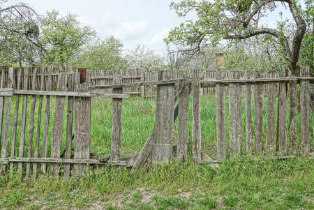 part of an old gray wooden fence with broken boards overgrown with green vegetation on a rural stree