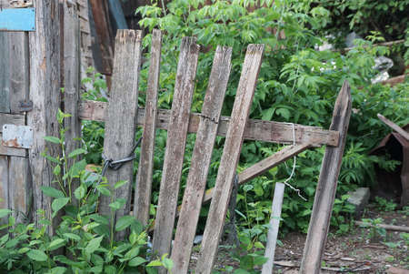 part of an old gray wooden fence with broken boards overgrown with green vegetation on a rural street Stockfoto