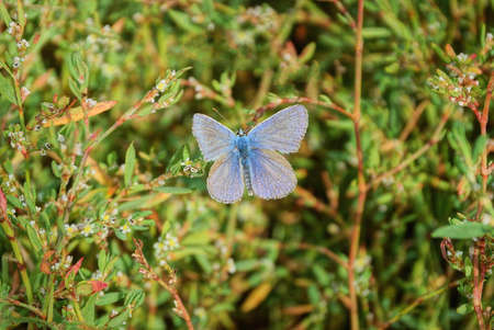 one small blue moth sits on a green stem of a wild plant in nature