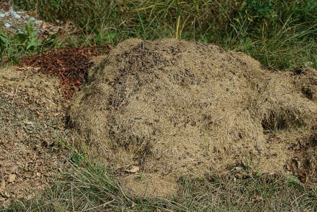 brown heap of hay from dry small grass in nature among green vegetation