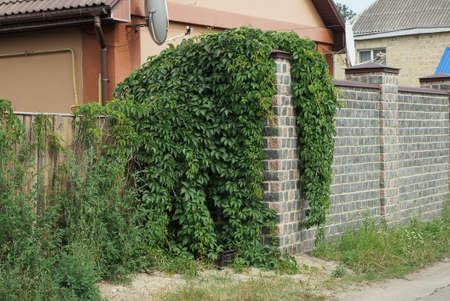 part of a gray brick and wooden fence wall overgrown with green vegetation on the street