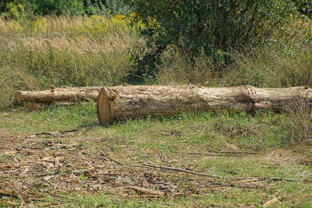 one big brown gray log lies in the green grass in nature