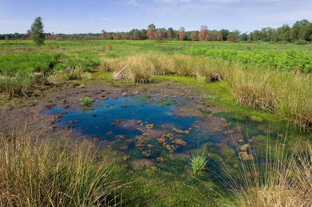 vegatation: A small pond in a nature reserve.  Note: Three weeks before this photo was taken everything was destroyed by a fire. After 21 days everything looks green again. Except for the trees in the background. Stock Photo