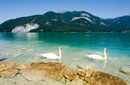 Yellow rocks on the shore of the Wolfgangsee in Austria, with two swans swimming by photo
