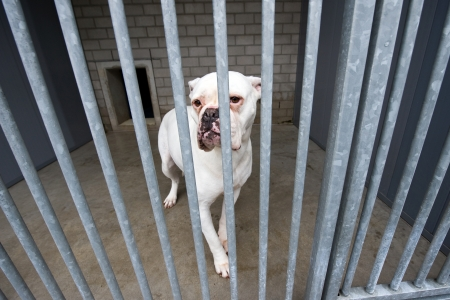 adopt: Homeless dog behind bars in an animal shelter Stock Photo
