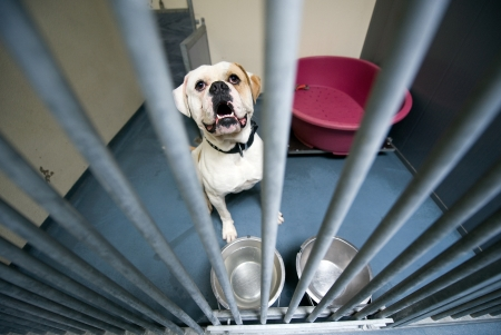 Homeless dog behind bars in an animal shelter photo