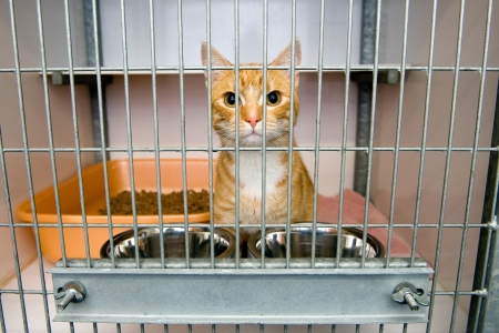 Homeless cat in a cage in an animal shelter