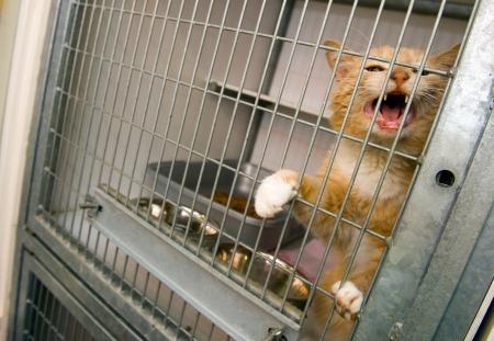 ケージ内にペットシェルター ホームレス猫 写真素材