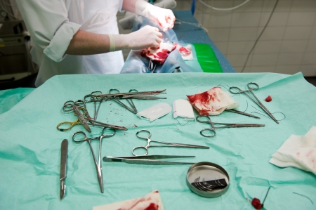 sterilization: The tools of a veterinarian while he is sterilizing a dog in a clinic