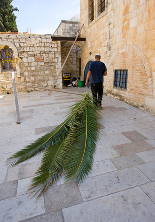 sukkoth: JERUSALEM, ISRAEL - 08 OCTOBER, 2014: A jewish man is pulling palm leaves with him to prepare for the
